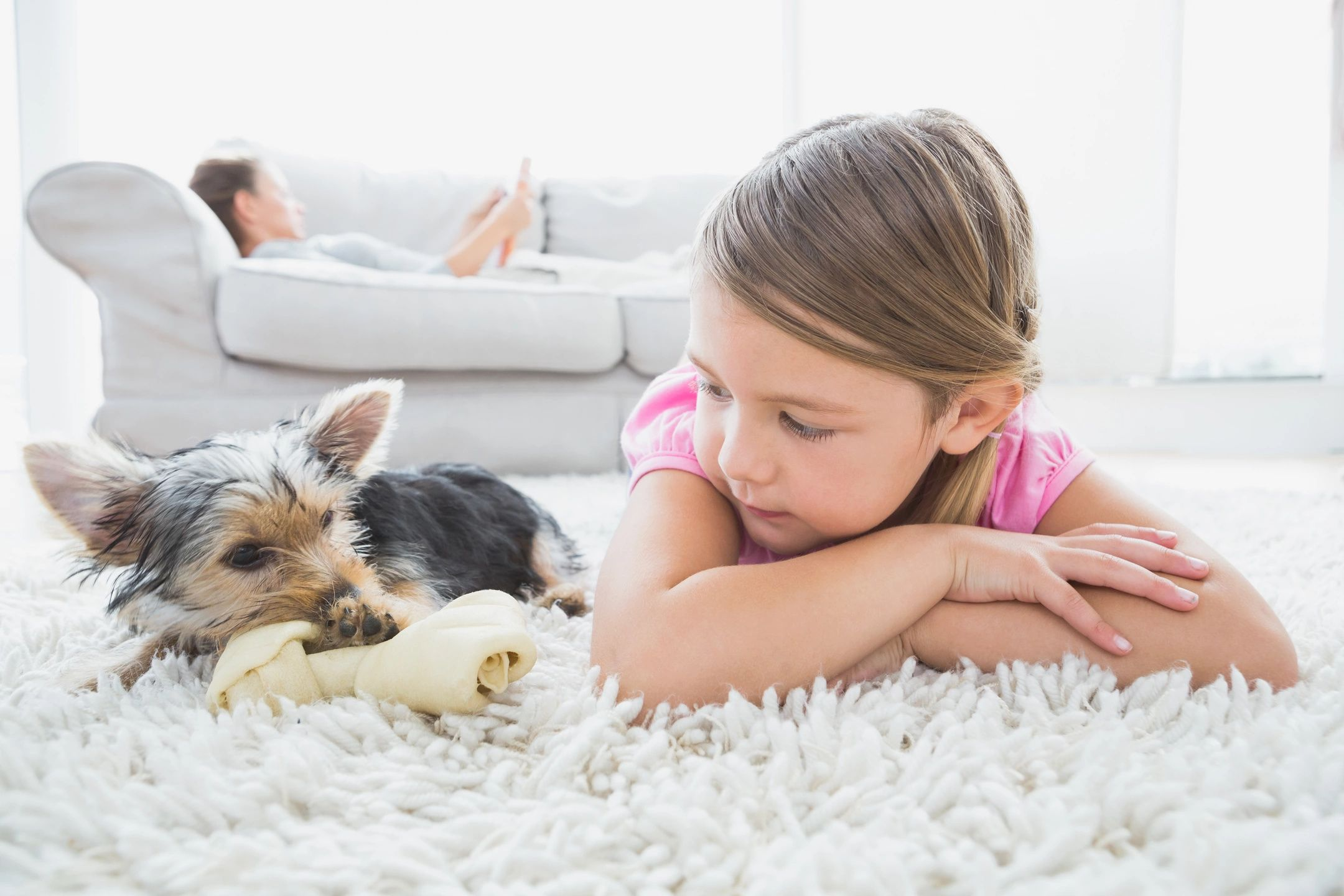 Professional Pet Odor & Stain Removal in Lawrence, Kansas